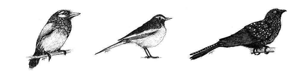 Anoop-Bhat-Eye-Candy-Birds-02