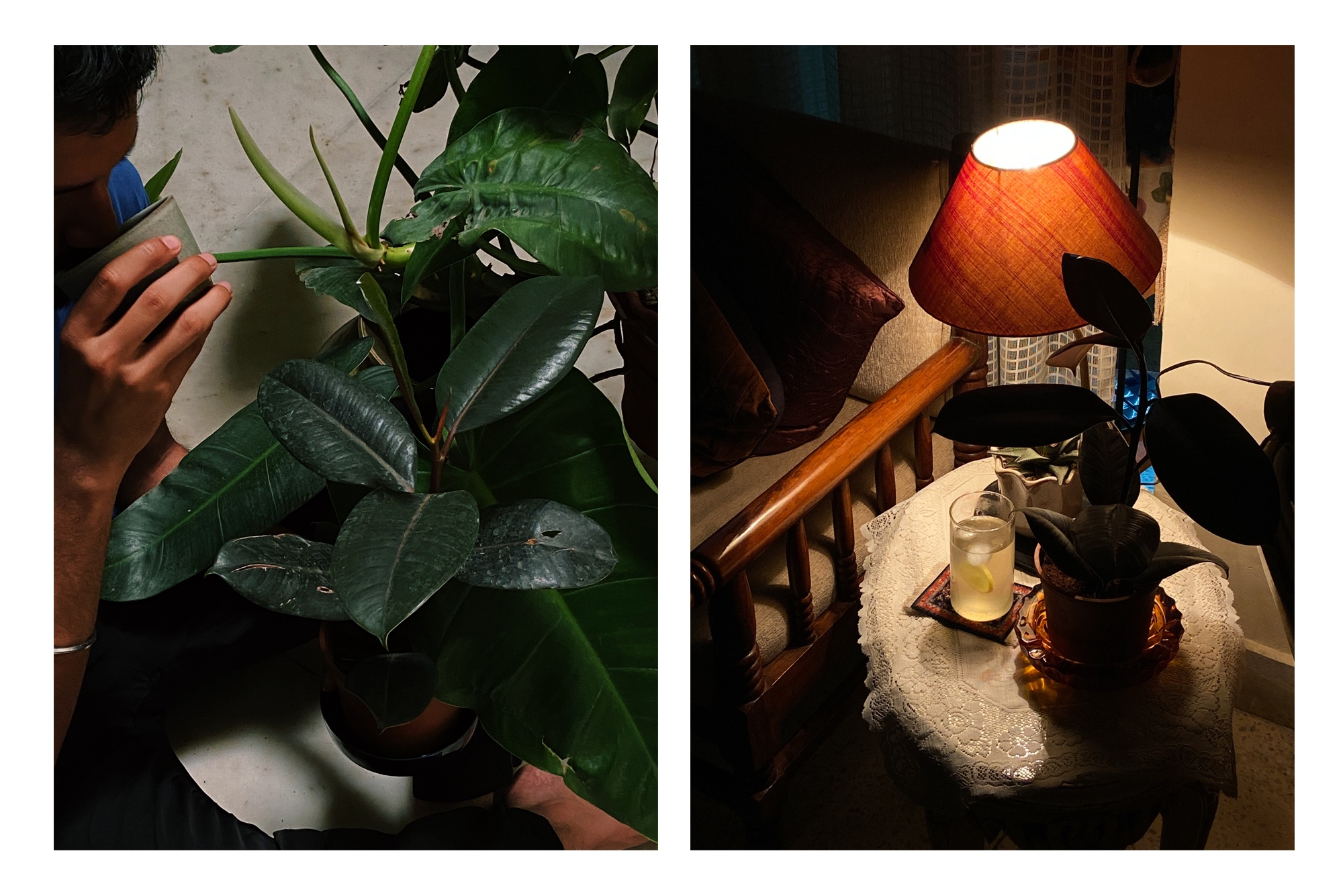 I_Brought_Home_A_New_Plant_Taarini_Sixth