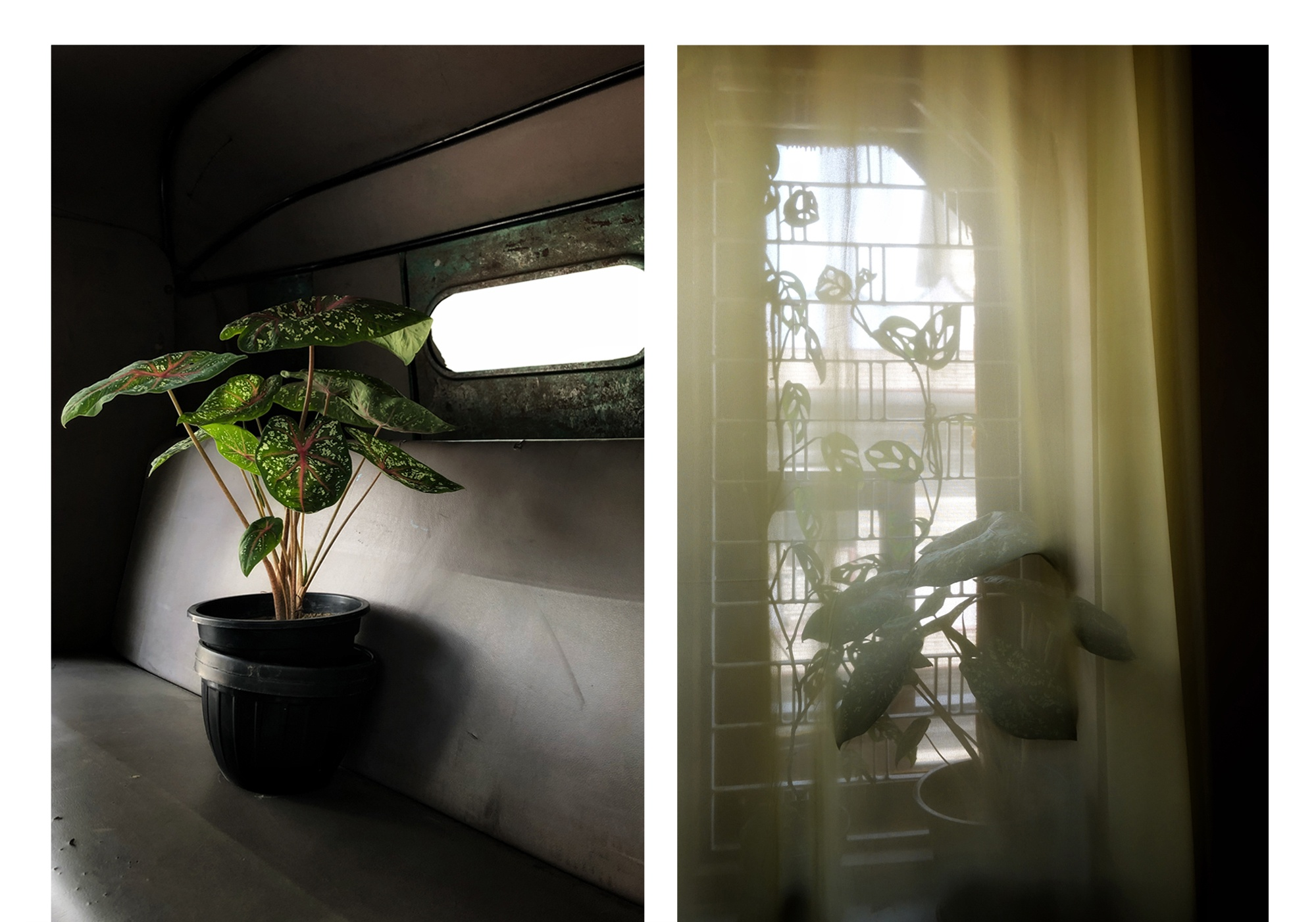 Menty_I_Brought_Home_A_New_Plant_1_RESIZE