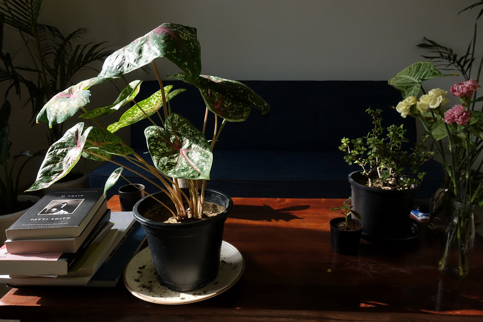 Menty_I_Brought_Home_A_New_Plant_4