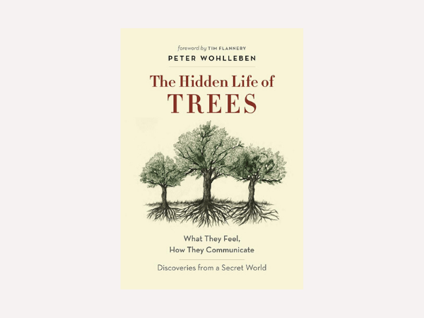 Christmas-books-The-hidden-life-of-trees