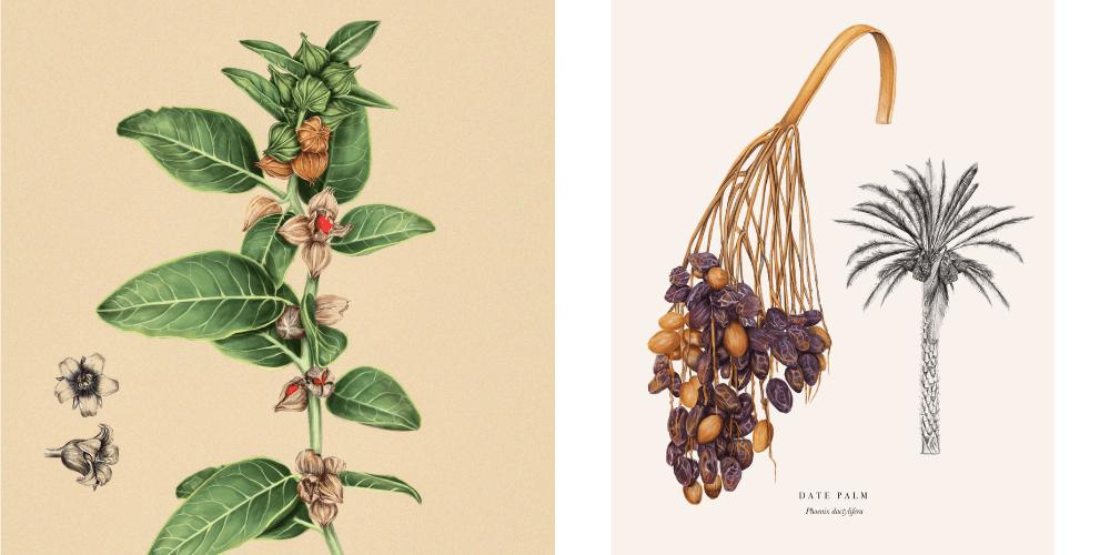 alisha-dutt-islam-botanical-illustrations