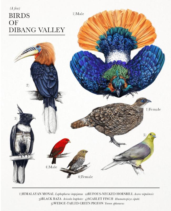 alisha-dutt-islam-dibang-valley-birds