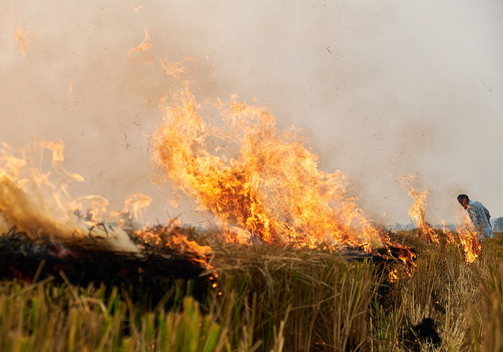 ikea-rice-straw-burning