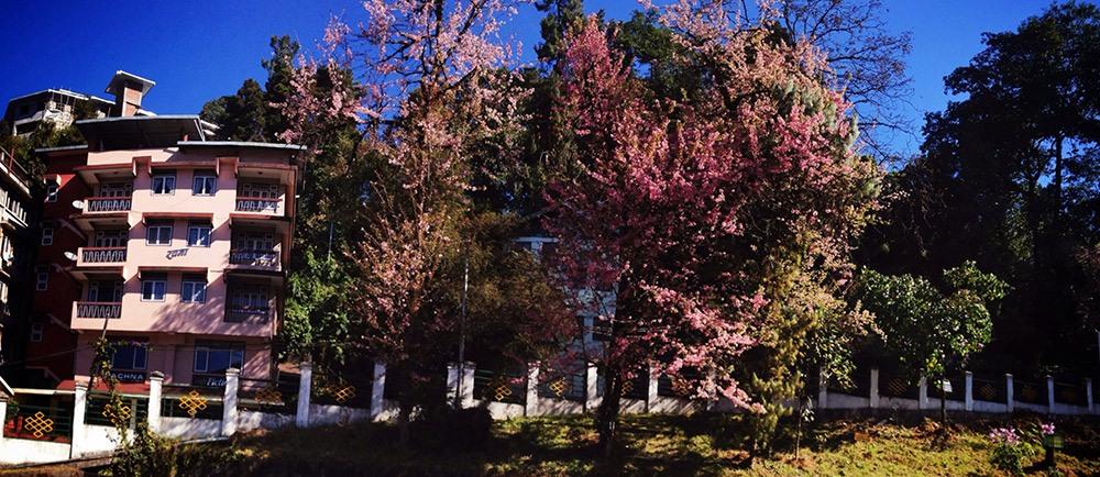rachna-books-cherry-blossom