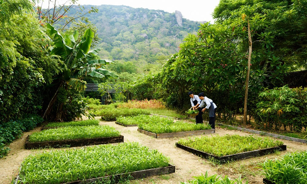 six-senses-organic-garden-wellness